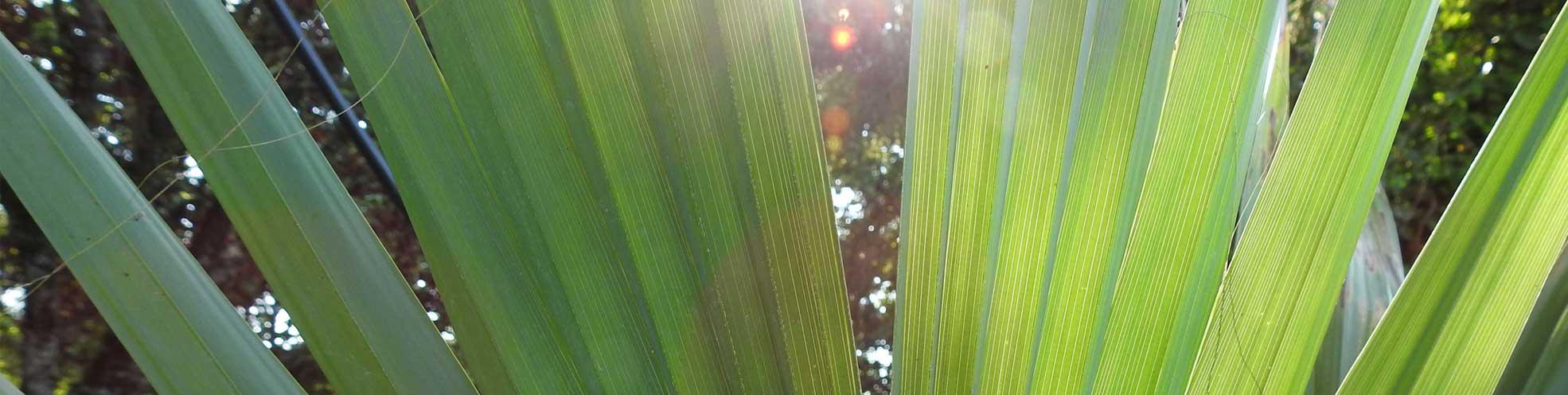 palmier chez ninjacoconut
